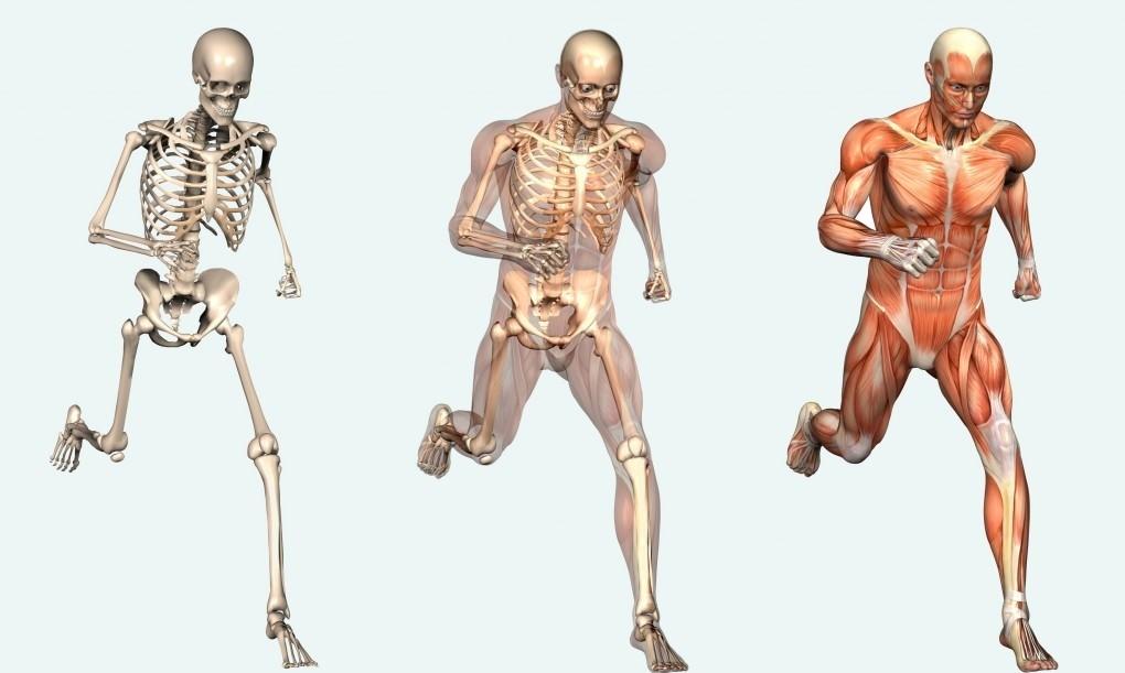 Fisioterapia en España Almendralejo Sara Ruiz Osteopatia