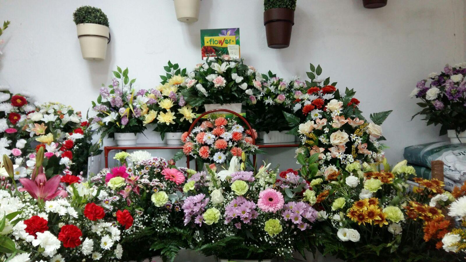 floristería Navalmoral de la Mata Los Abetos