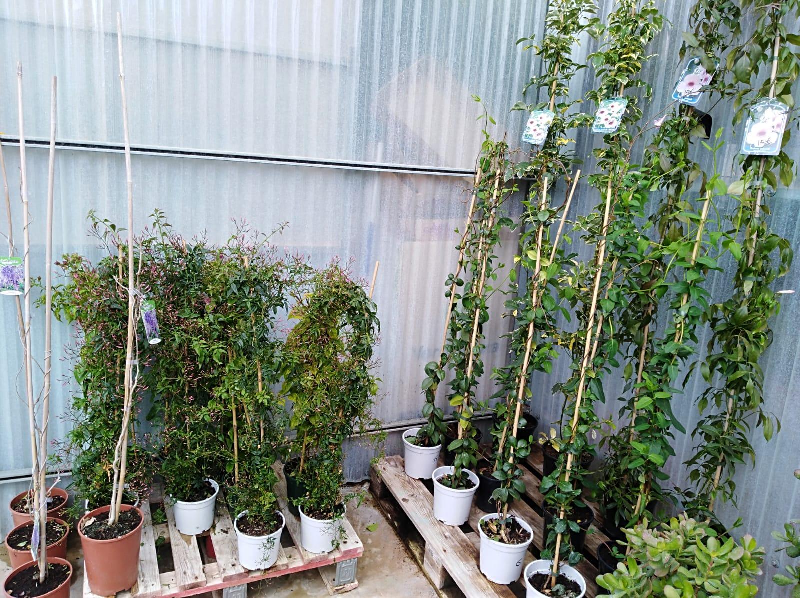 Vivero en España Almendralejo Centro de jardinería Tiza