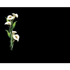 españa tanatorio en plasencia servicios funerarios funexpress