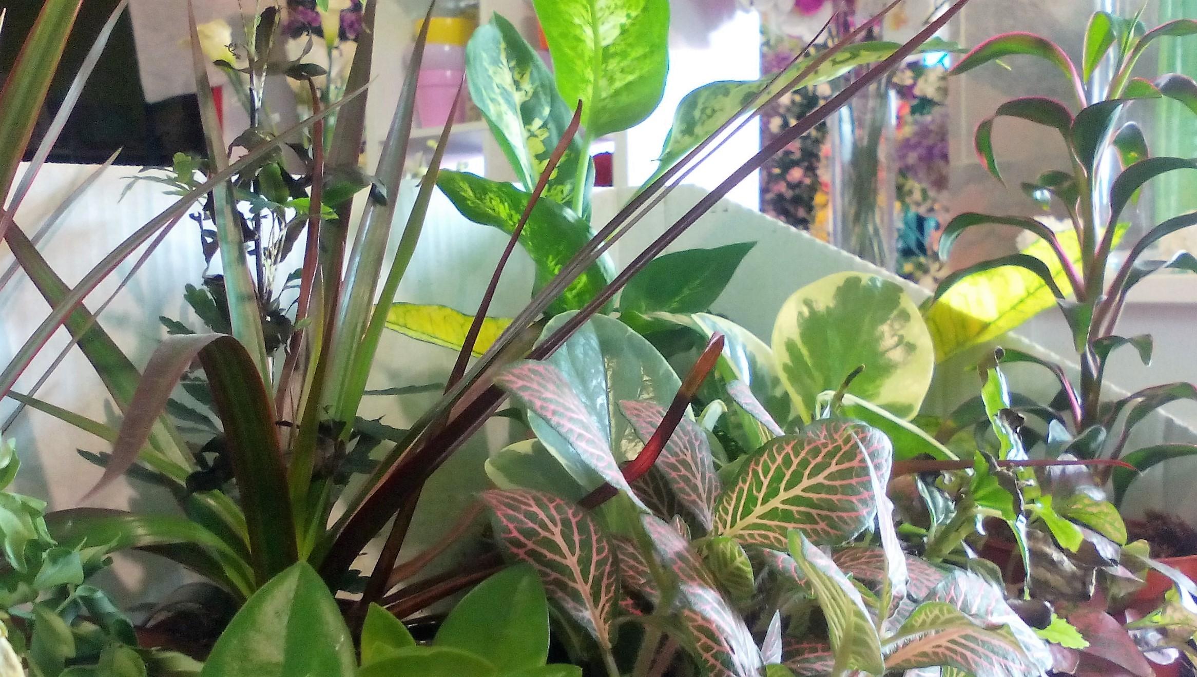 españa floristeria merida flornaturex