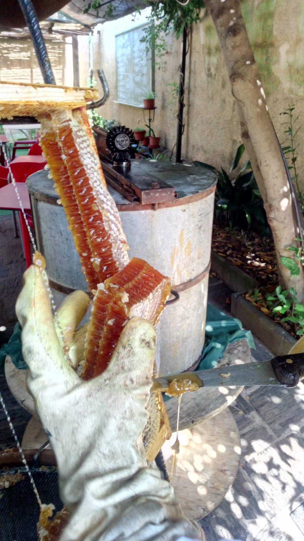 Miel de las Hurdes Restaurante en las Mestas Las Hurdes Casa Cirilo