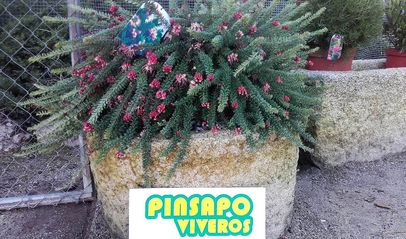 vivero Cáceres Pinsapo -Malpartida de Cáceres