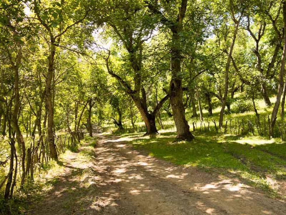 España Reforestación Cáceres Plasencia Buenaventura La Vera (2)