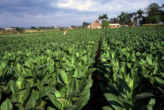 Fabrica España Pellet Biomasa Agrotabaco